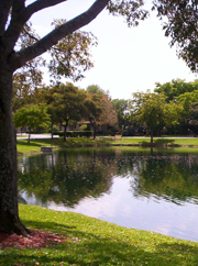 nova village tree and lake